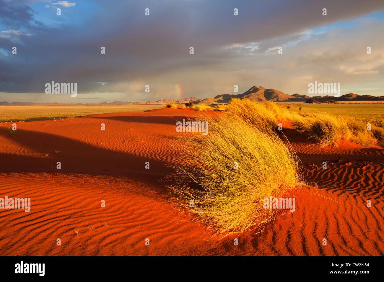 Paysage au coucher du soleil montrant l'écologie unique du sud-ouest du désert du Namib ou pro -le Namib. NamibRand Nature Reserve, Namibie Banque D'Images