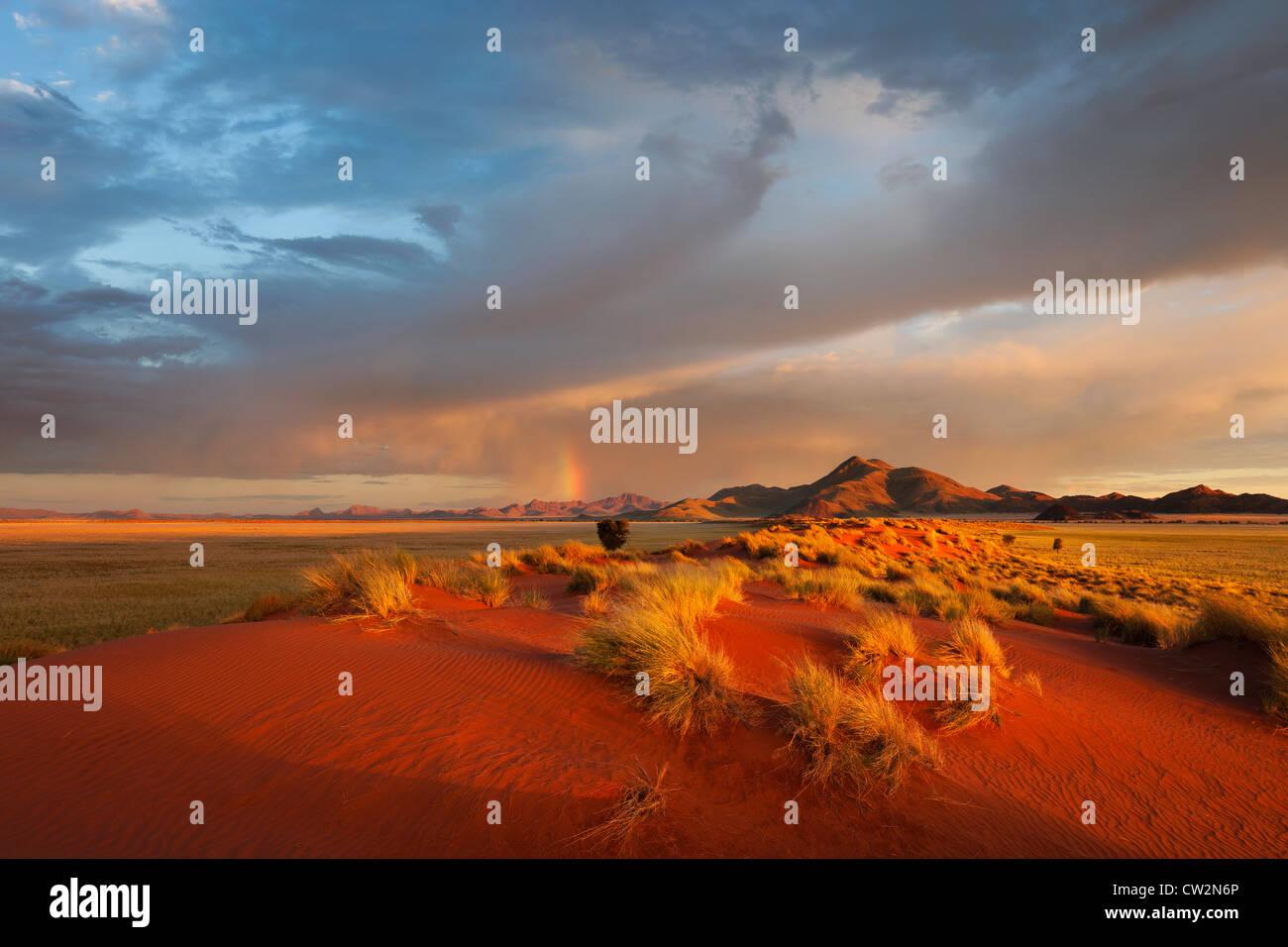 Paysage au coucher du soleil montrant l'écologie unique du sud-ouest du désert du Namib ou pro -le Photo Stock