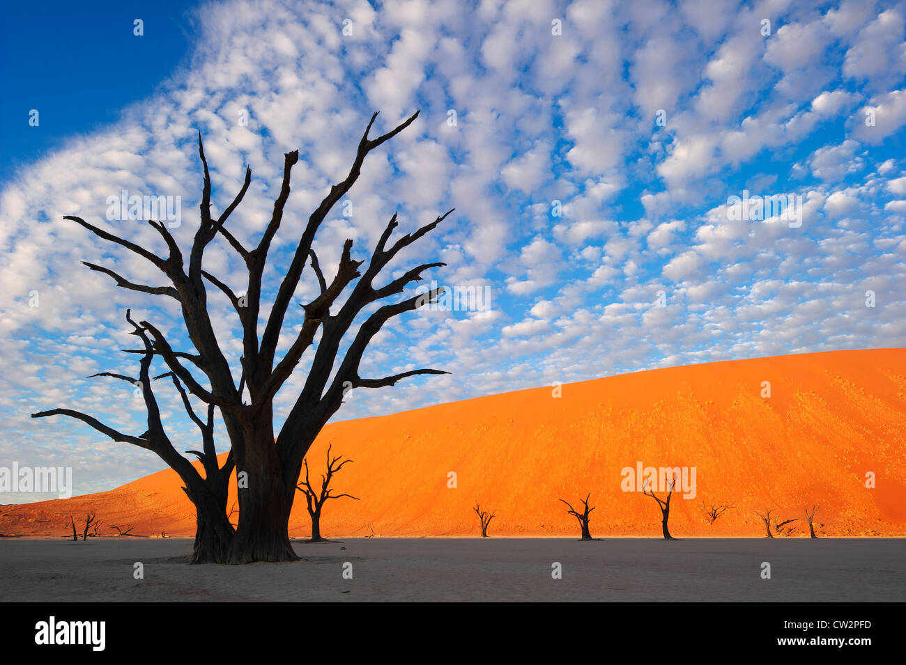 Marais salant. Dead Vlei.La Namibie Photo Stock