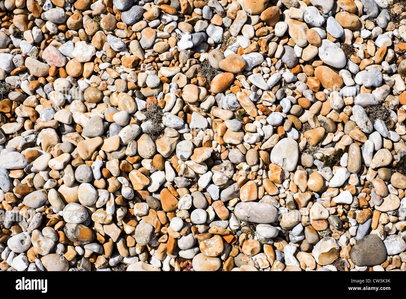 Galets sur une plage de galets avec des massifs d'herbiers Photo Stock