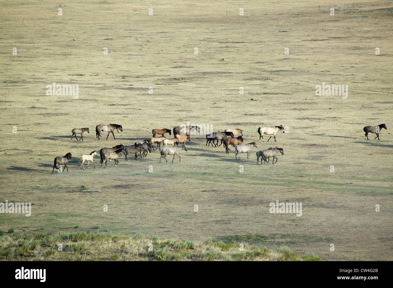 Troupeau de chevaux lointain shot Black Hills Wild Horse Sanctuary accueil à plus grand troupeau de chevaux sauvages Banque D'Images