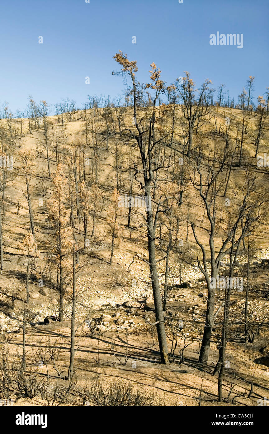Voir les dégâts de feu de jour 2006 le long de la route de la vallée de Lockwood (près de Pine Mnt. Frazier Park) Banque D'Images