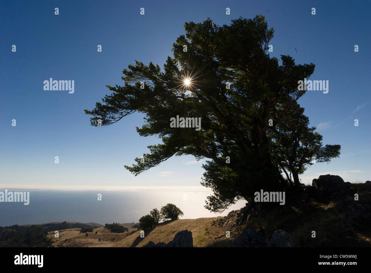 Mont Tam (Mont Tamalpais), comté de Marin, près de San Francisco, en Californie. Photo Stock