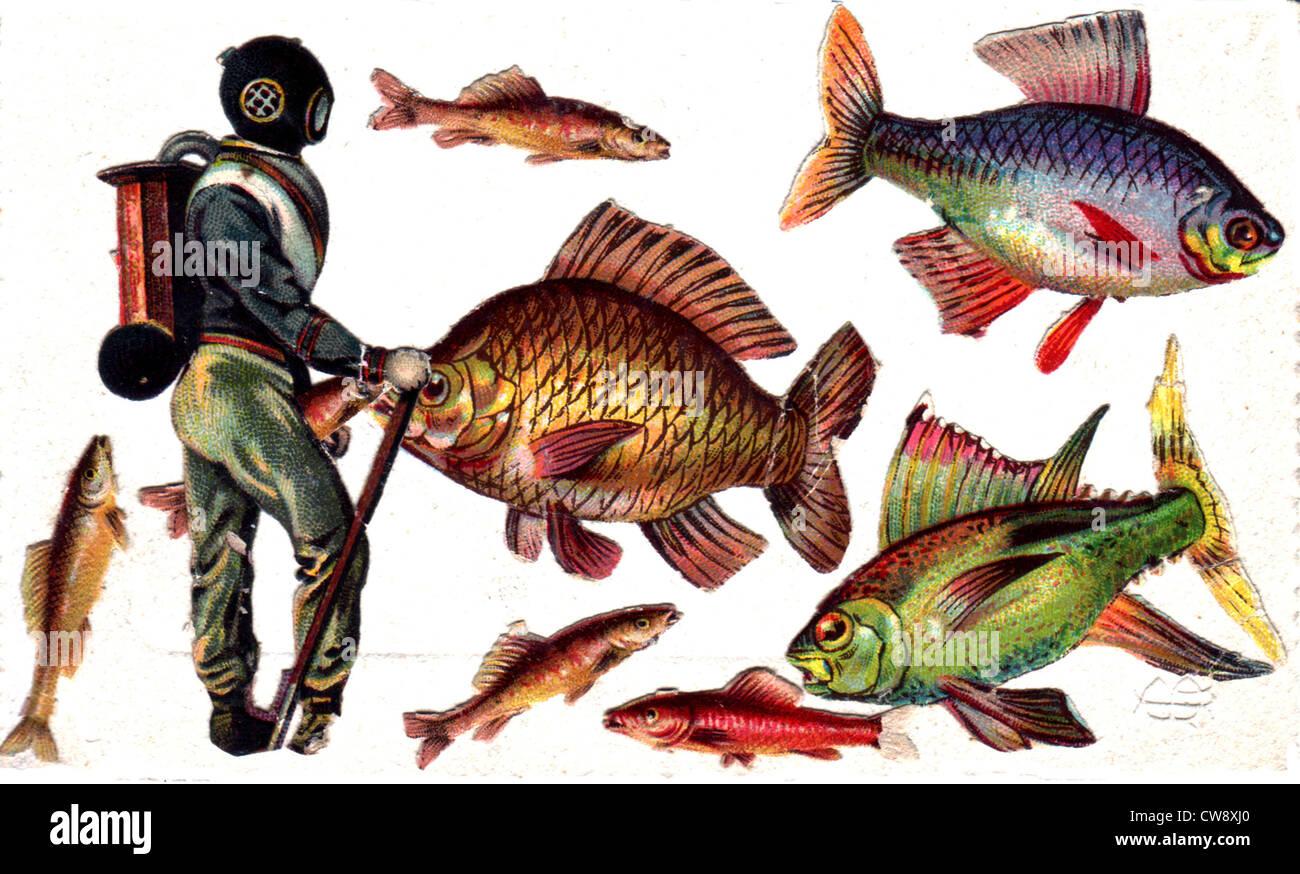 Collage: plongée sous-marine et les poissons Photo Stock