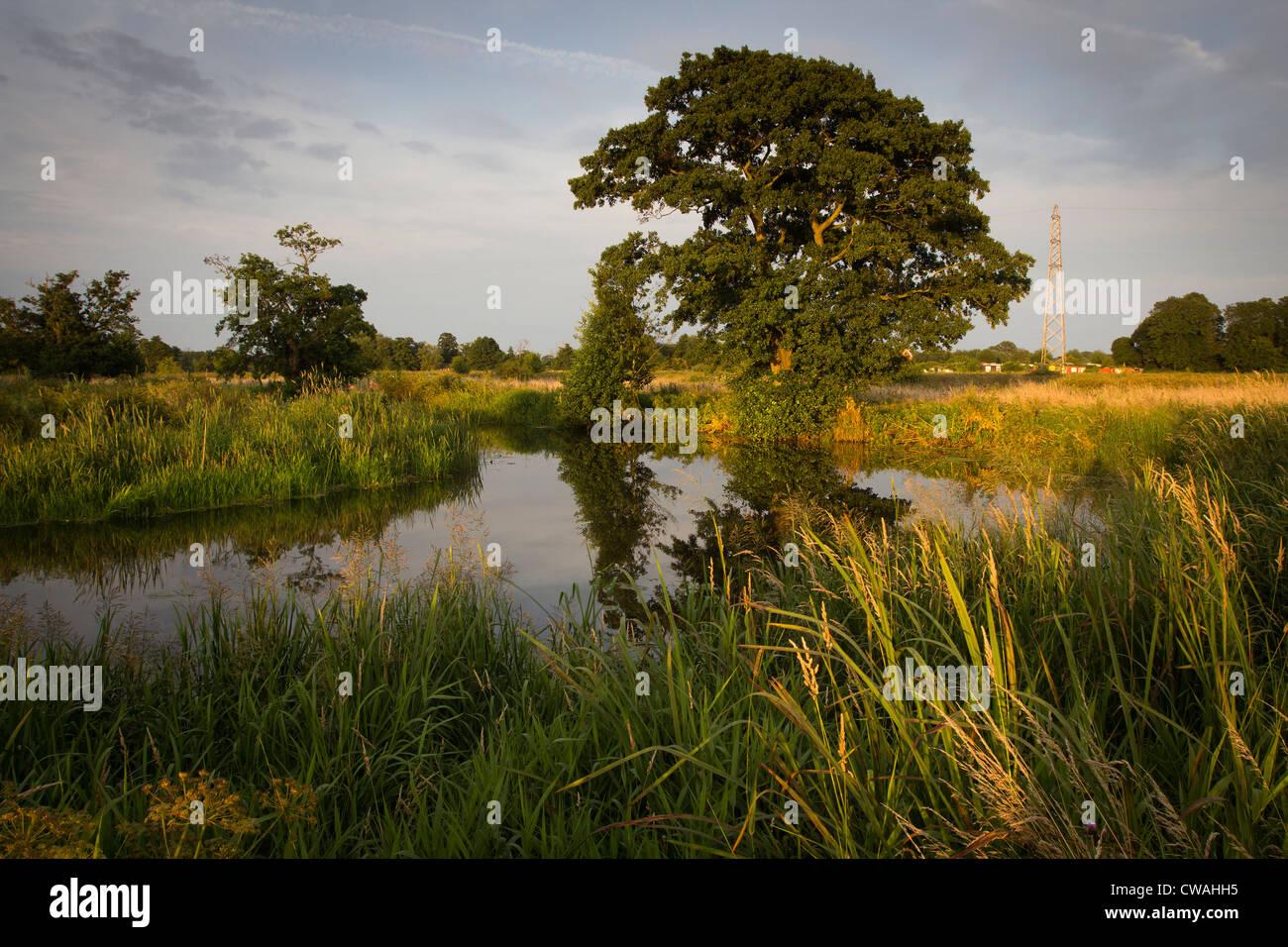 Papercourt prés de l'eau le long de la rivière Wey. Nr. Ripley, Surrey, UK. Photo Stock