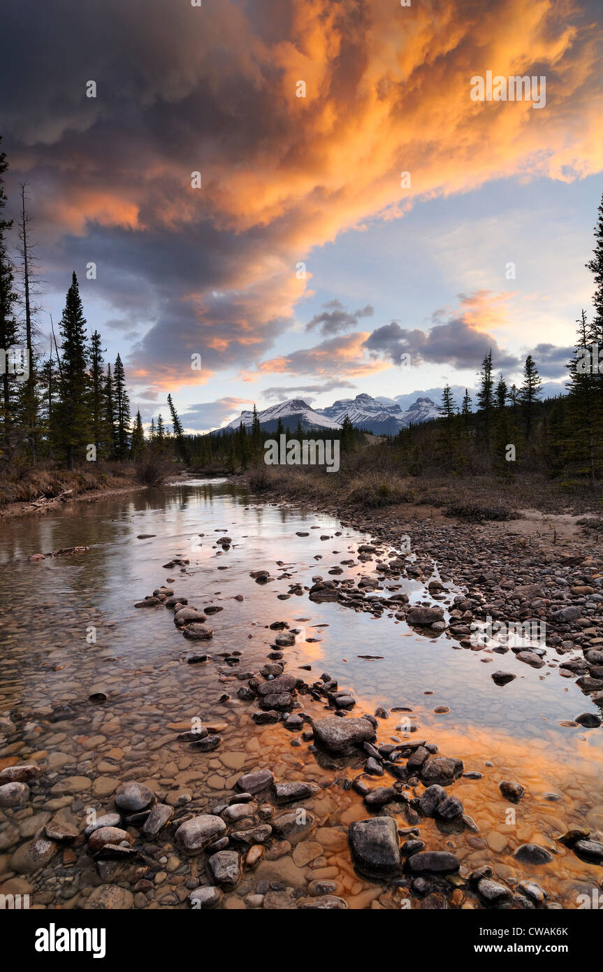 Rivière Saskatchewan Nord, Mont Erasmus, Banff National Park, Alberta, Canada Photo Stock