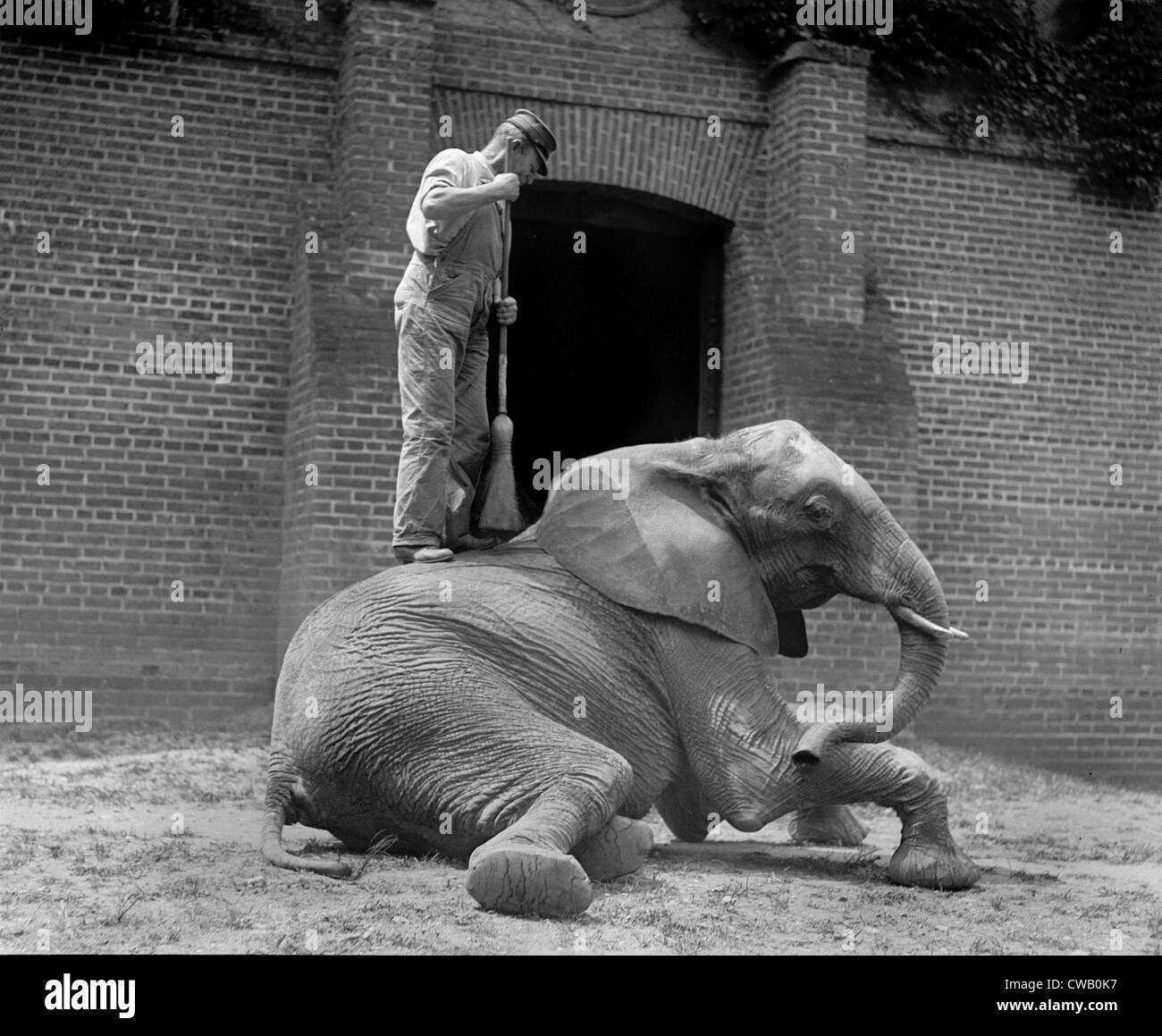 Un éléphant, formateur et Jumebina l'éléphant, 1922. Photo Stock