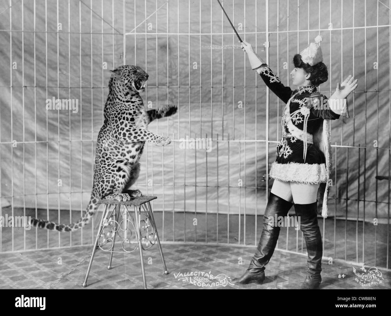 L'Vallecita léopards. Entraîneur des animaux femelles et leopard, 1900-1910 Photo Stock