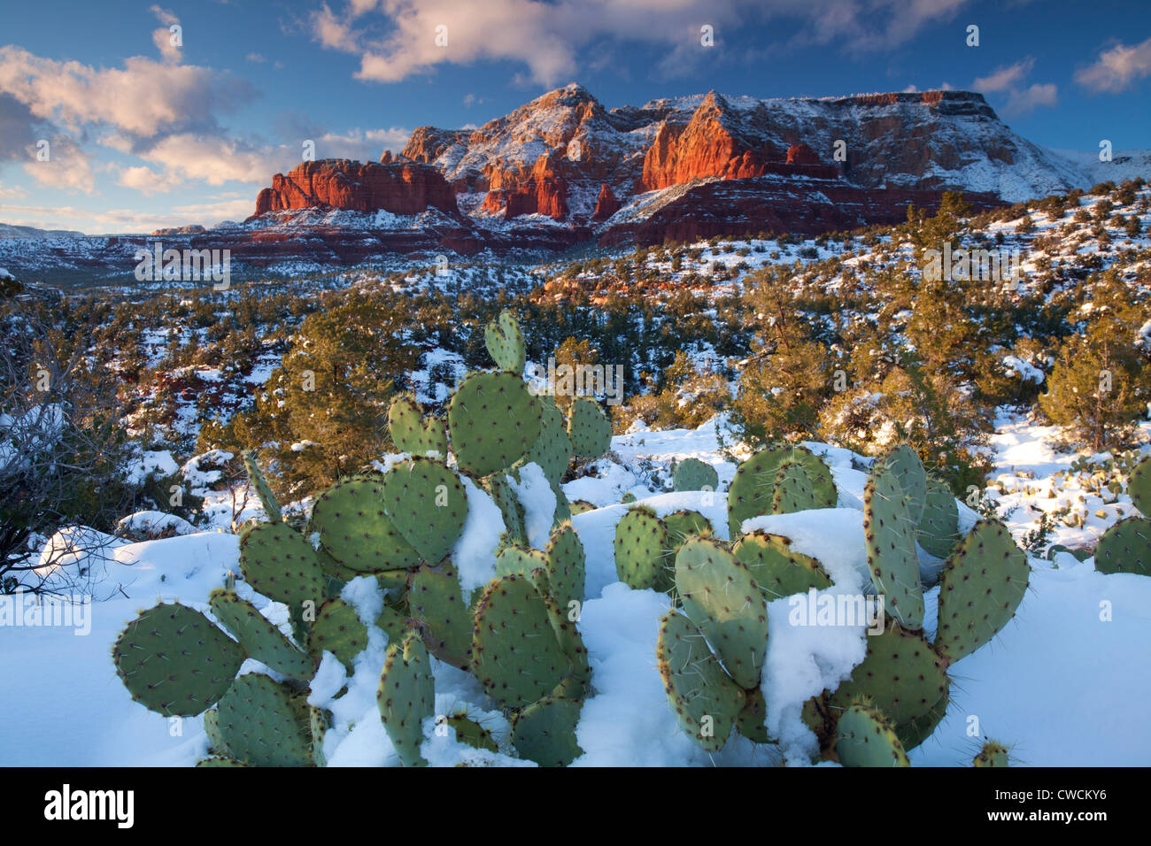 Hiver neige sur Schnebly Hill, Coconino National Forest, Sedona, Arizona. Photo Stock