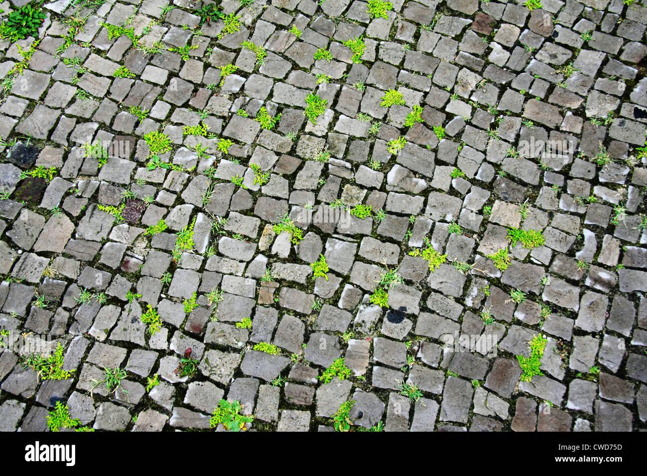 La lutte contre les mauvaises herbes,cobblestone Photo Stock