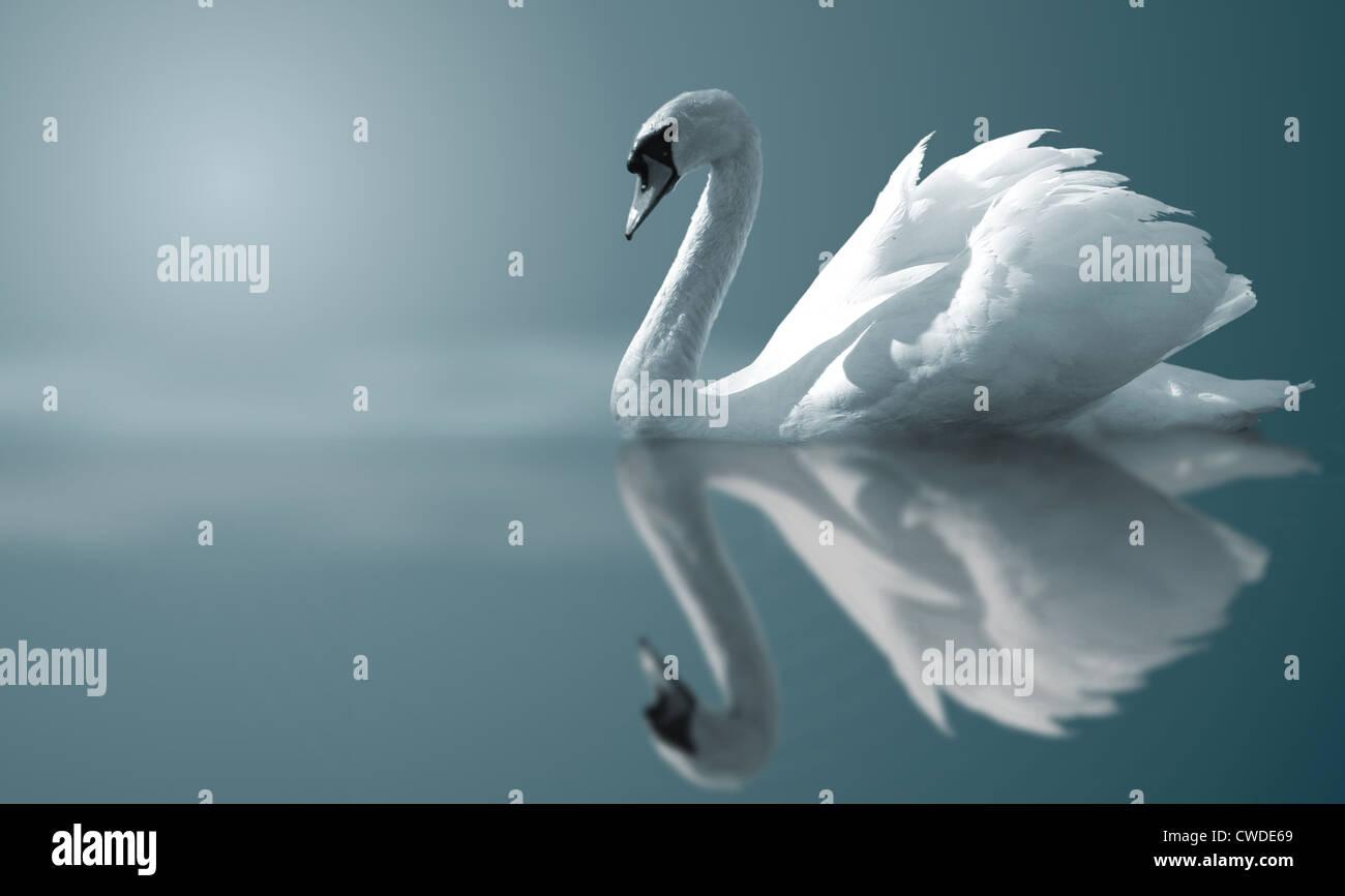 réflexion, swan Photo Stock