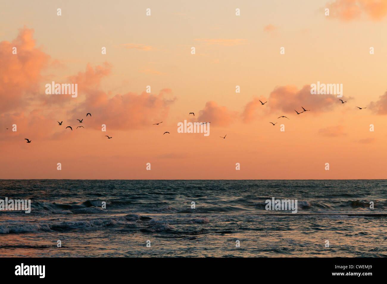Les oiseaux voleront au-dessus de la mer au coucher du soleil, Les Sables d'Olonne, Pays de la Loire, France. Banque D'Images