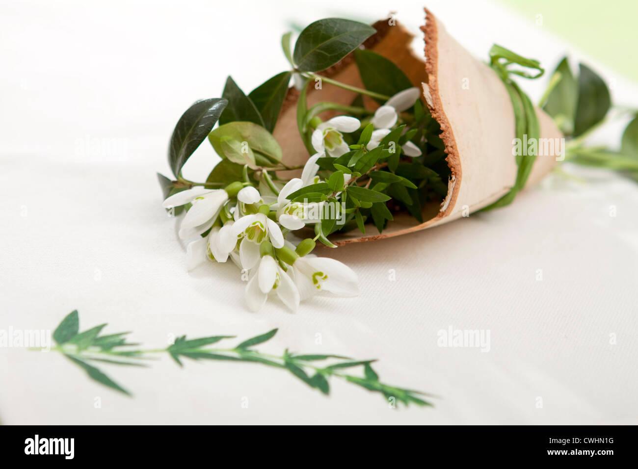 Snowdrop en torsion en bois Photo Stock