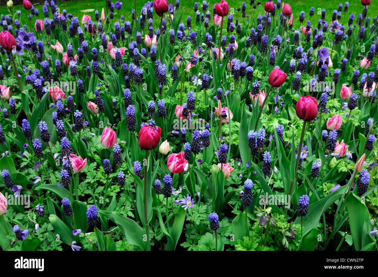 Frontiere Lit Melange En Fleurs De Printemps Bleu Ampoules Couleur
