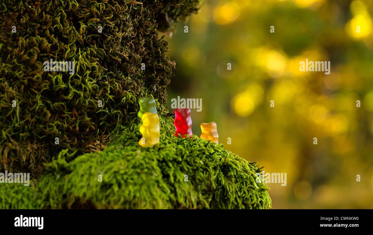 Haribo, ours gommeux sur de la mousse! Banque D'Images