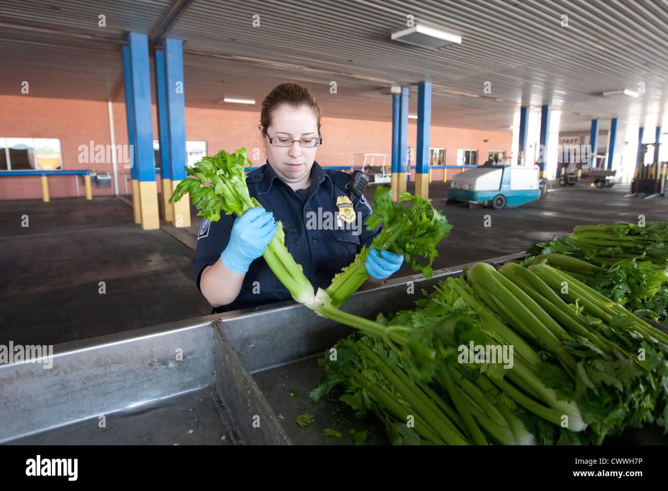 Pour les spécialistes de l'agriculture femme U.S Customs and Border Protection, inspection des boîtes Photo Stock