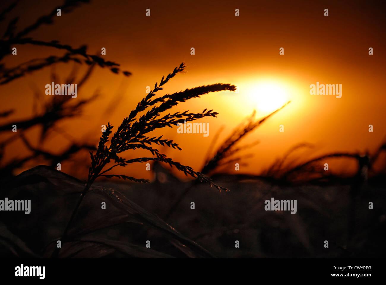 Coucher de soleil nuageux sombre dramatique Photo Stock
