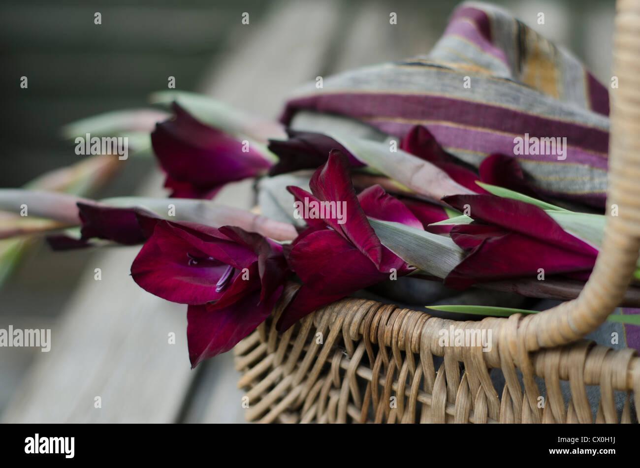 burgundy gladioli photos burgundy gladioli images alamy. Black Bedroom Furniture Sets. Home Design Ideas