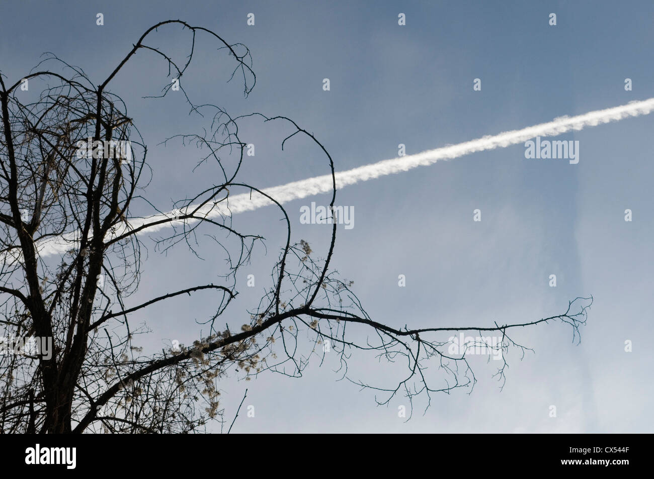 Arbre et trace d'avion sky Photo Stock