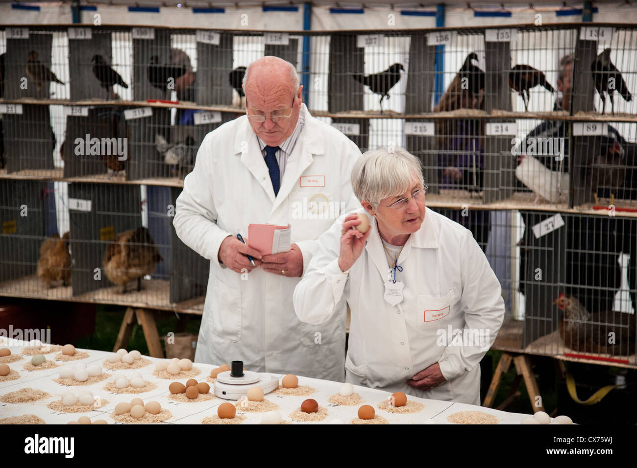 Les juges L'évaluation des entrées d'oeufs au comté de Westmorland 2012 Show, près de Photo Stock