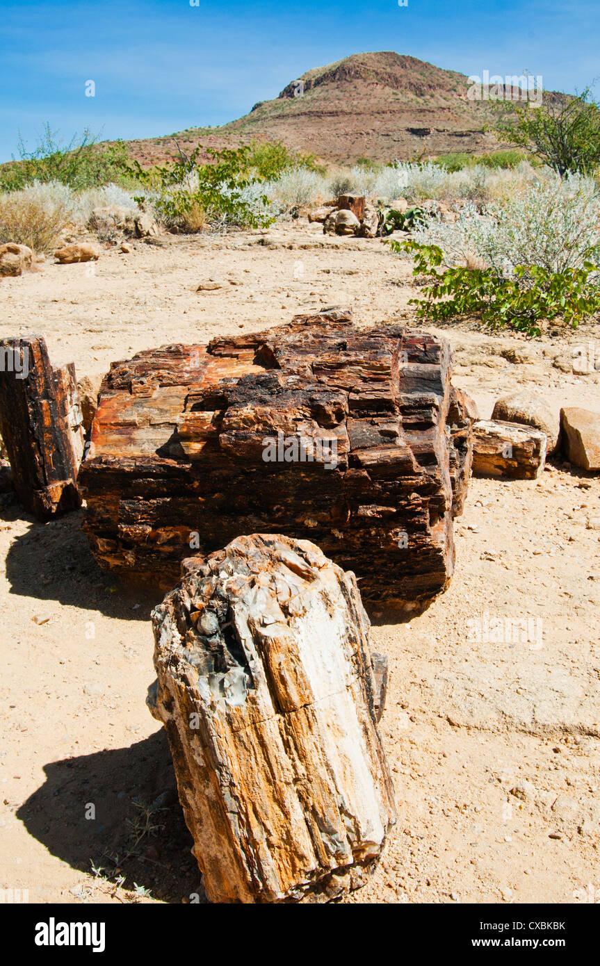 Close-up de troncs d'arbres fossilisés, Forêt Pétrifiée, Damaraland, région de Kunene, Namibie, Afrique Banque D'Images