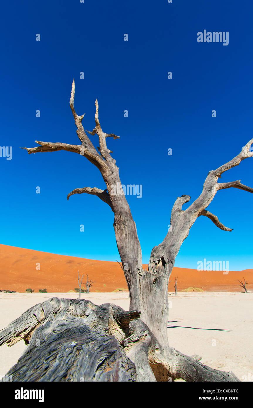 Sossusvlei, Désert du Namib, le Namib Naukluft Park, Namibie, Afrique Photo Stock