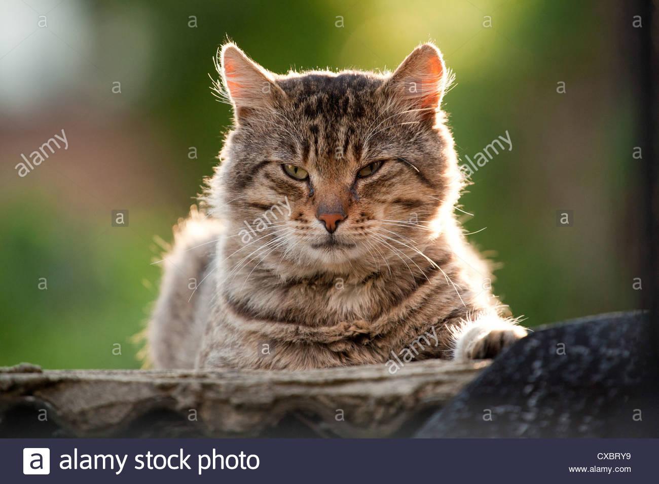 gratuit chatte lécher l'image vieil homme adolescent porno tube