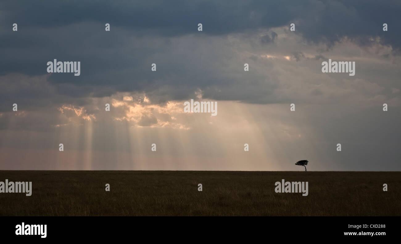 Paysage de la savane au Kenya Photo Stock