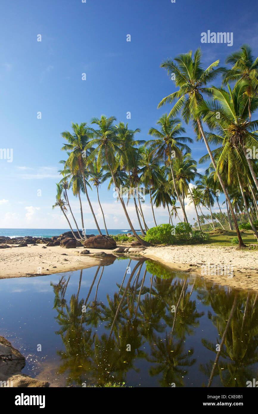 Vue de la plage préservée au Palm Paradise Cabanas, Tangalle, côte sud, Sri Lanka, Asie Photo Stock