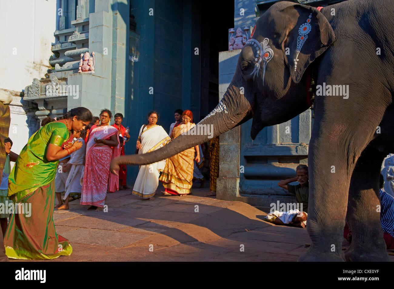 Bénédiction de l'éléphant, Kamakshi Amman, Kanchipuram, Tamil Nadu, Inde, Asie Photo Stock