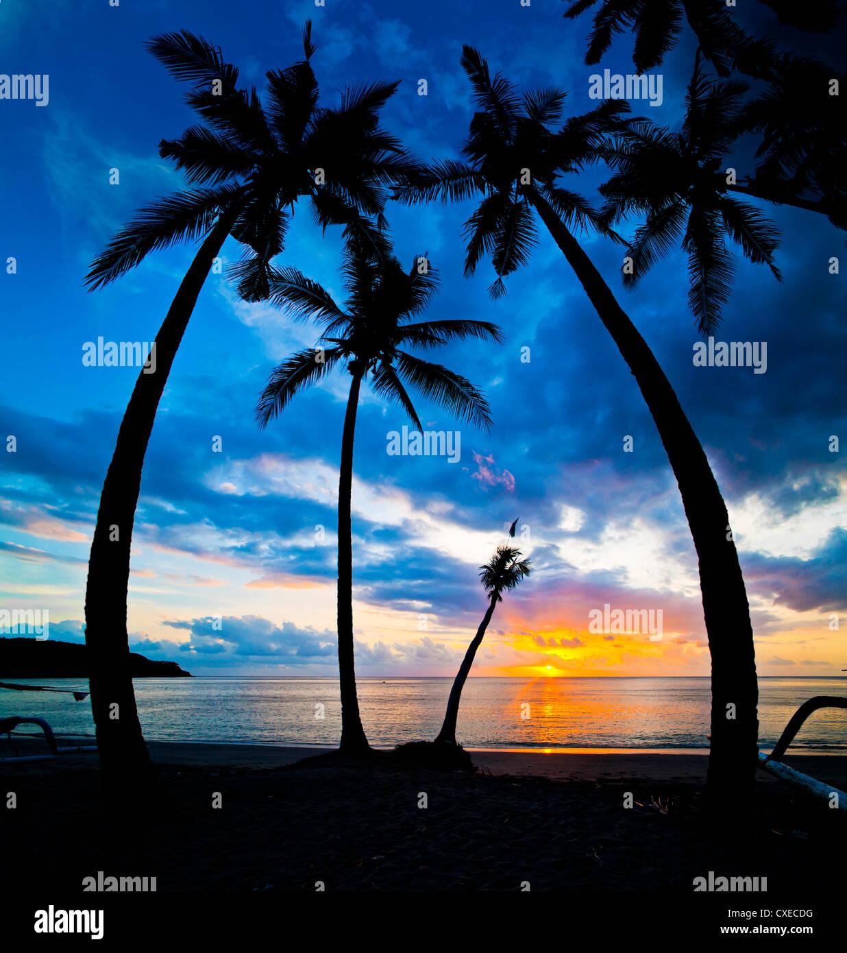 Silhouette de palmiers au coucher du soleil, Nippah Beach, Lombok, Indonésie, Asie du Sud, Asie Photo Stock