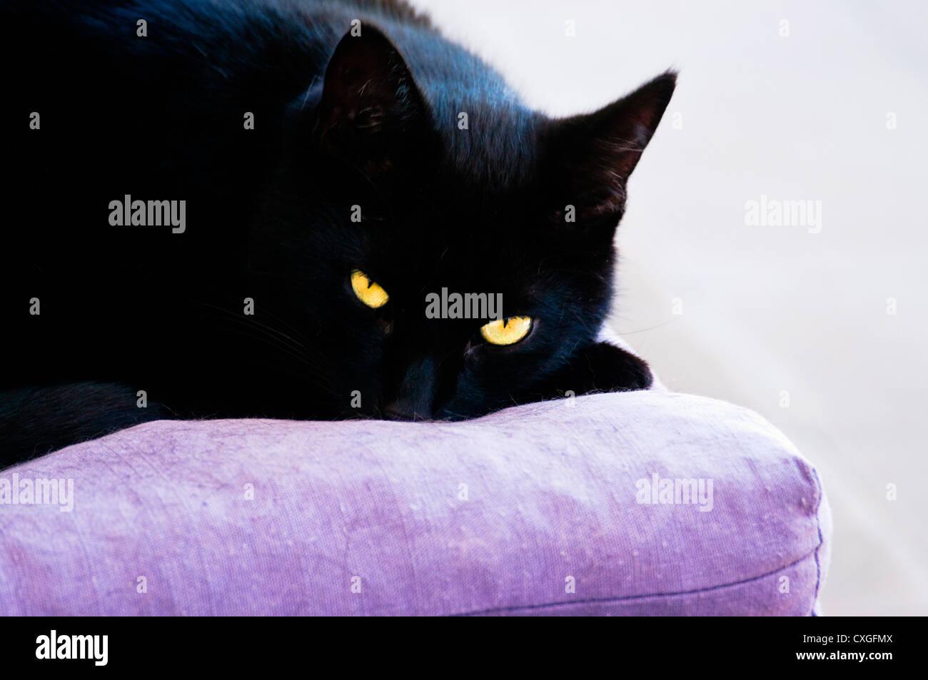 noir GF chatte pics noir poilu chatte baisée dur