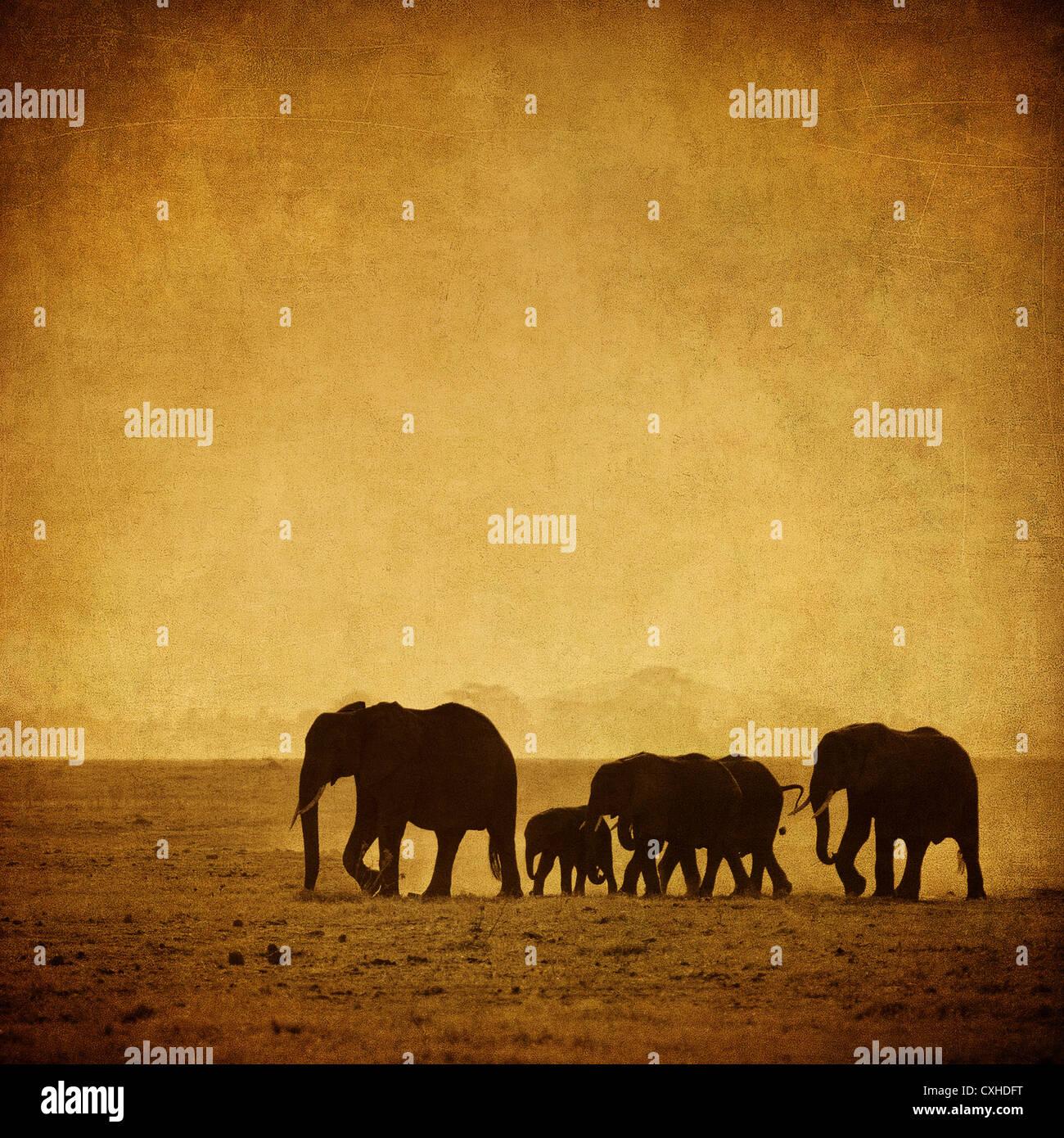 La famille d'éléphants Photo Stock