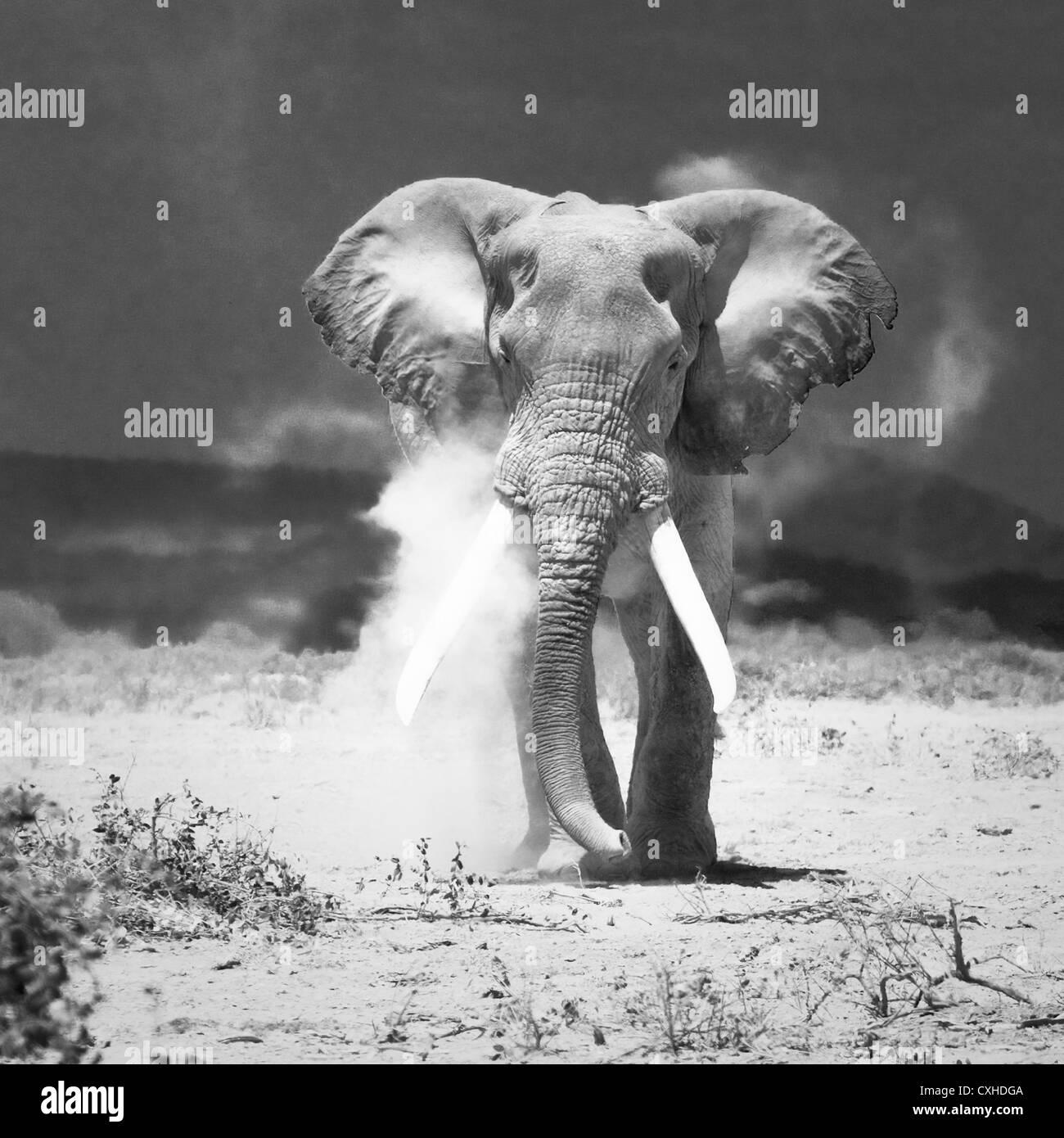 vieil éléphant Photo Stock