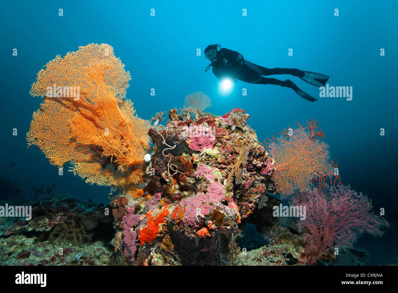 Plongeur avec une torche à la recherche à une barrière de corail avec coraux différents, paysages Photo Stock