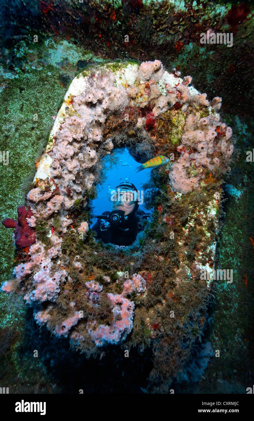 Scuba Diver regardant à travers le trou d'ancrage hawse à l'avant, l'épave du Zenobia, Photo Stock