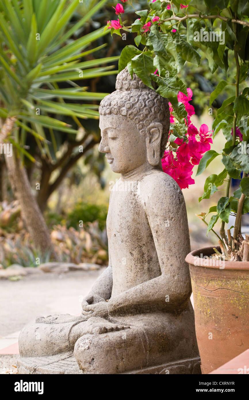 statue de bouddha en pierre dans un jardin de bougainvilliers