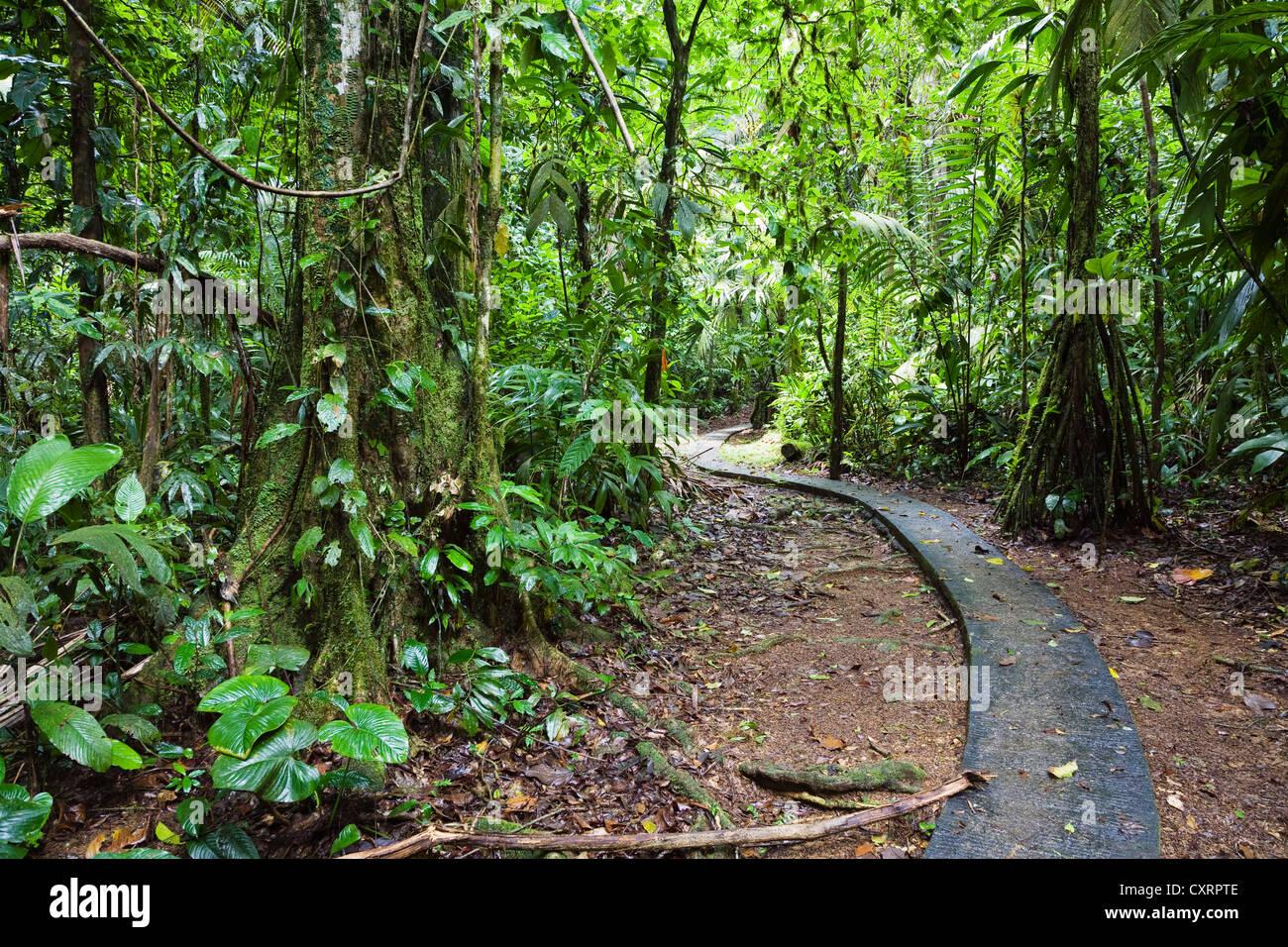 Sentier dans la forêt tropicale de plaine de la Station biologique de La Selva, Parc National Braulio Carrillo, Photo Stock