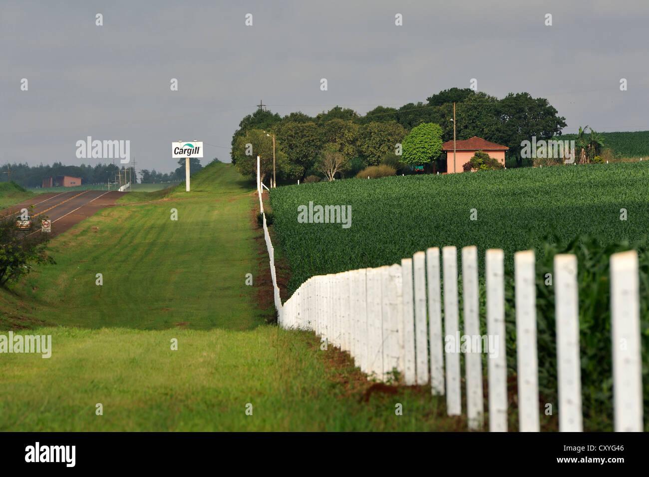 Rural Road, bordée de champs de maïs, le maïs génétiquement modifié, un signe de l'entreprise Photo Stock