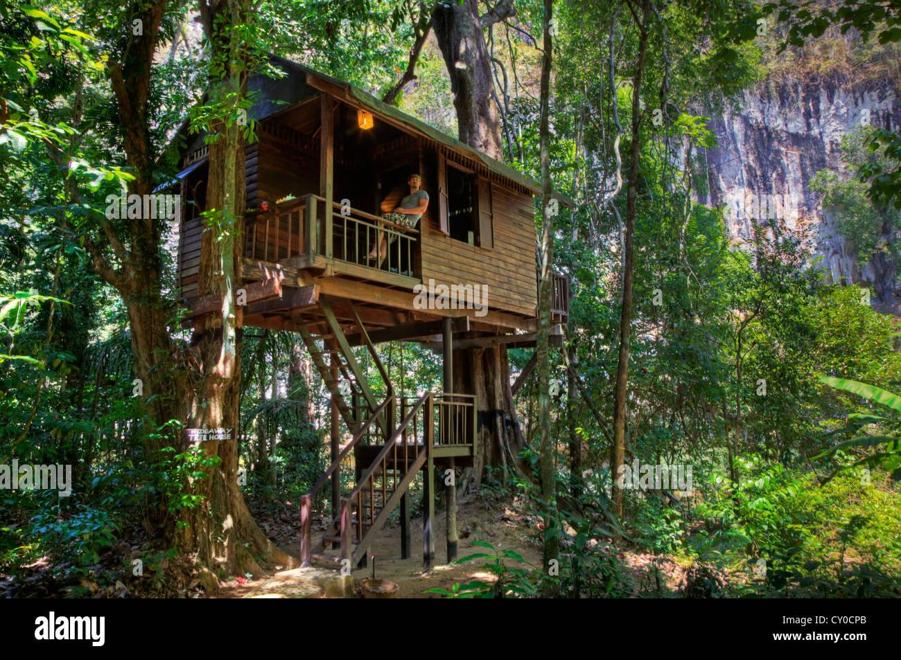 Maisons dans les arbres sont la spécialité de notre chambre une jungle lodge, près de Parc national Photo Stock
