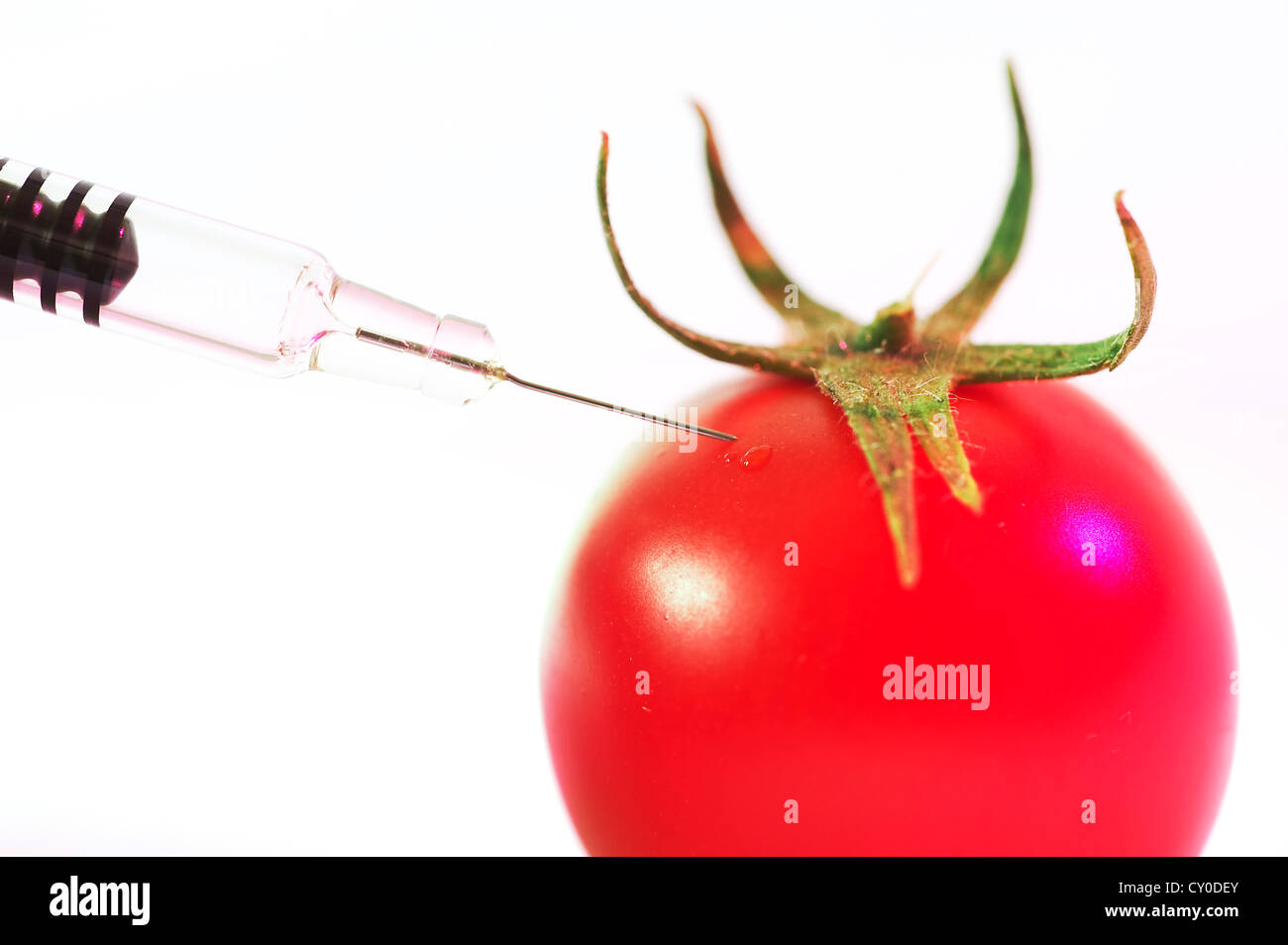 Close up d'une aiguille injectant une tomate GM Photo Stock