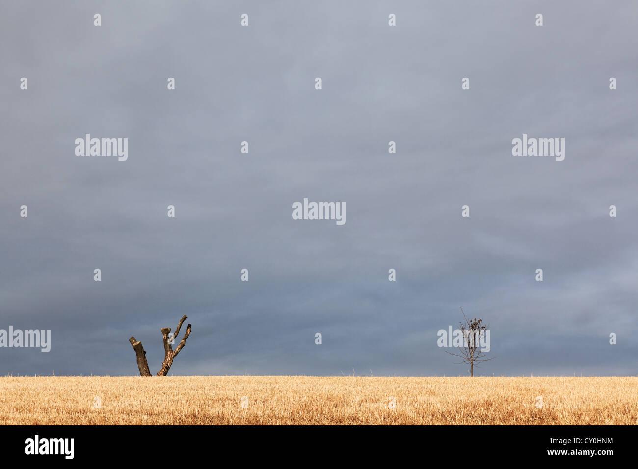 Deux à l'horizon de l'arbre contre un ciel d'orage, on est vieux et qu'il a eu c'est branches Photo Stock