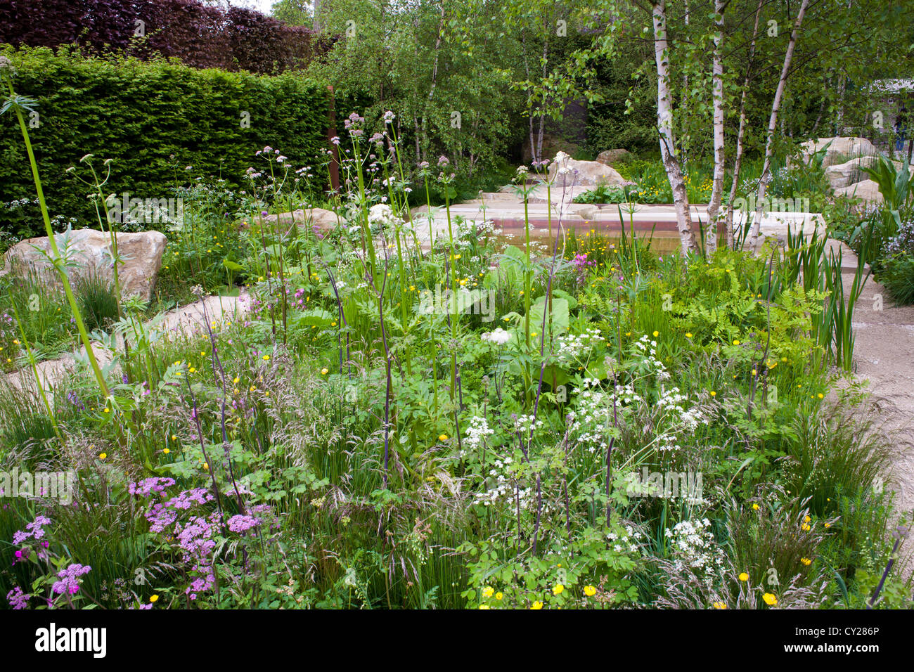 Combinaison de plantes dans le jardin contemporain. Le ...