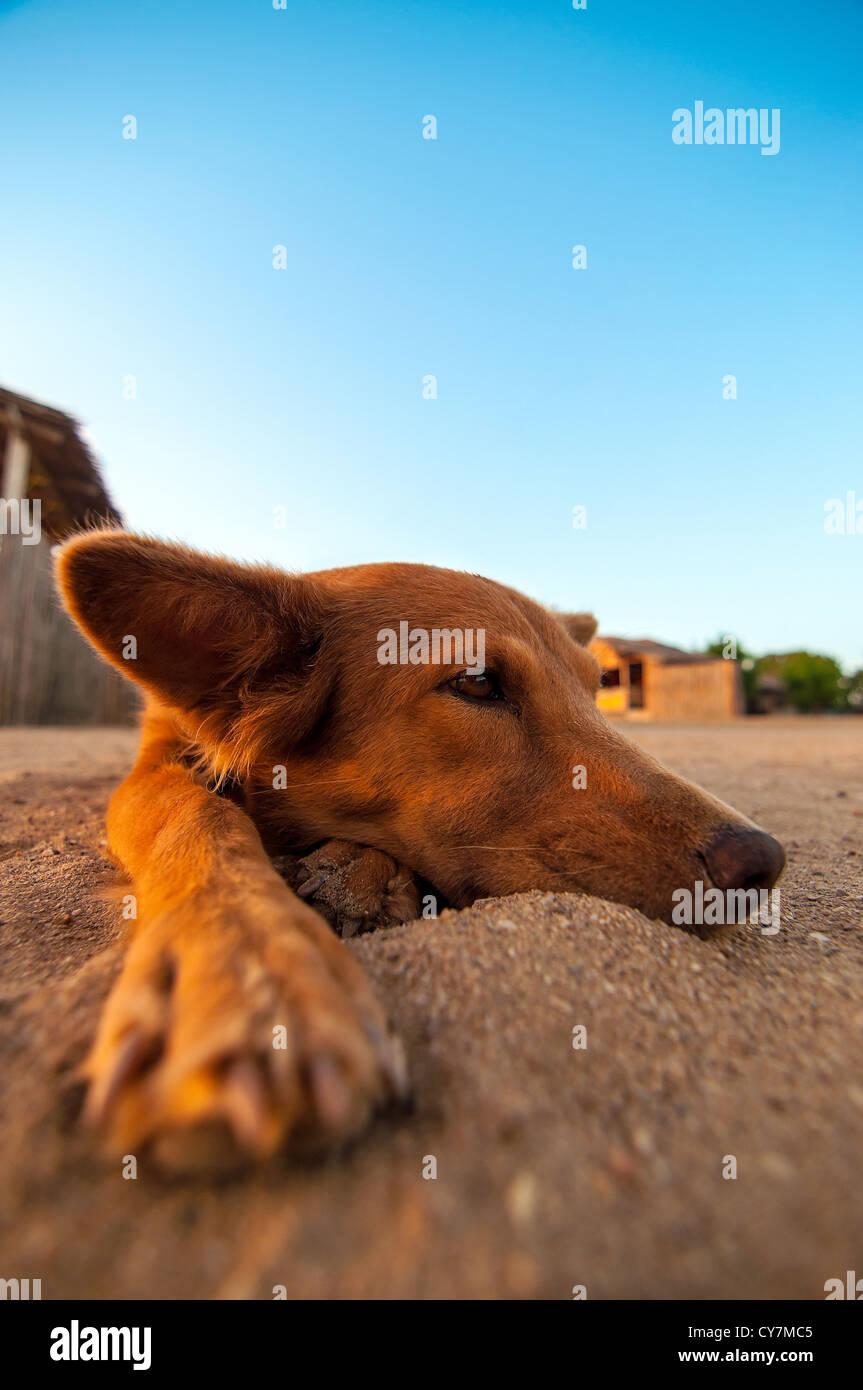 Un chien couché dans le sable sur une plage et se détendre. Photo Stock