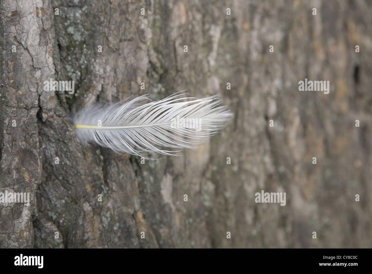 Plume d'oiseau déposée dans un tronc d'arbre, Prospect Park, Brooklyn, New York. Photo Stock