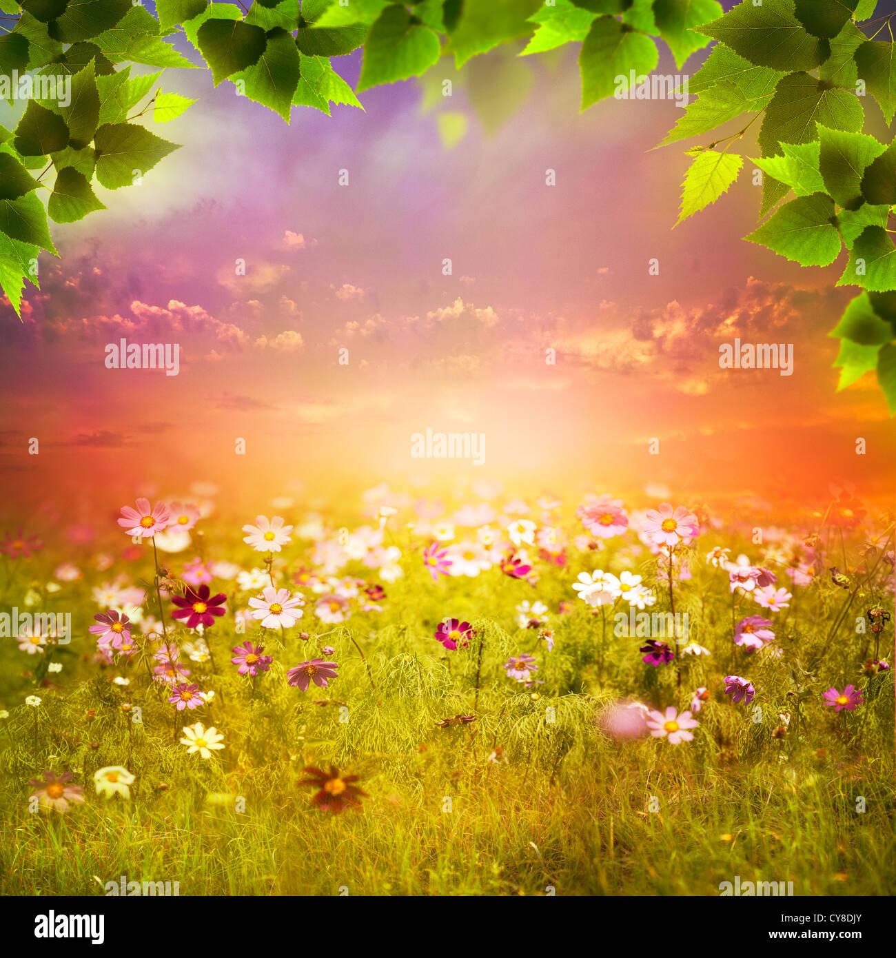 Soirée mystique sur le pré. Image fonds naturels abstrait pour votre conception Photo Stock