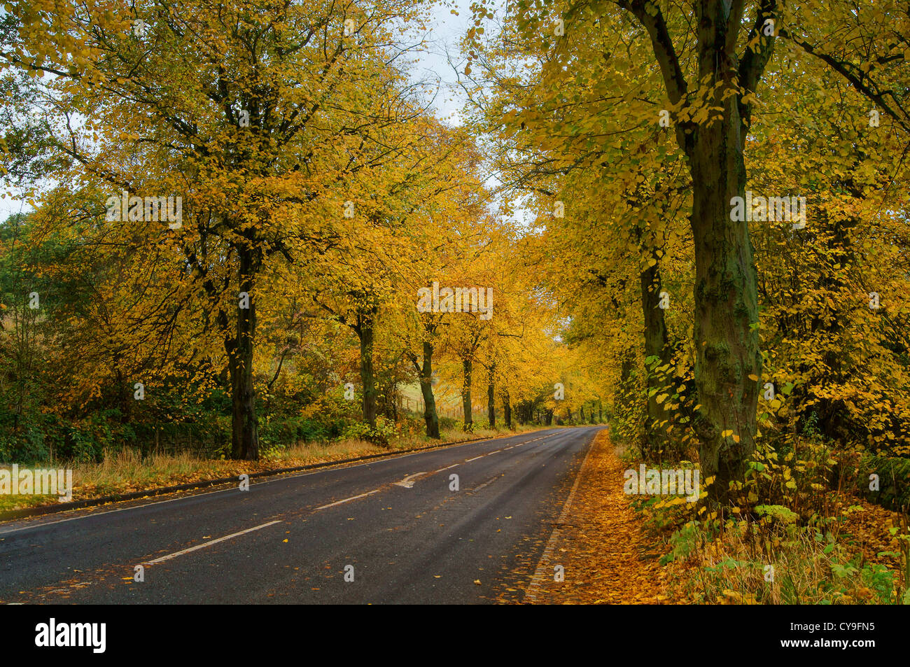 A57 Road & Woodland en automne,Vallée Rivelin,Sheffield,South Yorkshire Banque D'Images