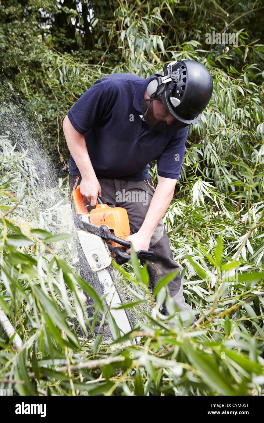 À l'aide de travailleurs forestiers dans la scie à chaîne Photo Stock