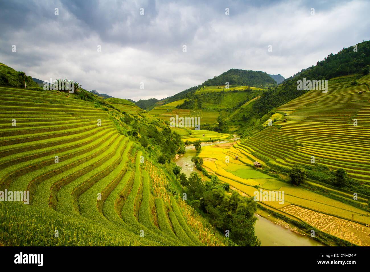 Rizières en terrasses des minorités ethniques Hmong, vivant dans le nord-ouest de la région montagneuse Photo Stock