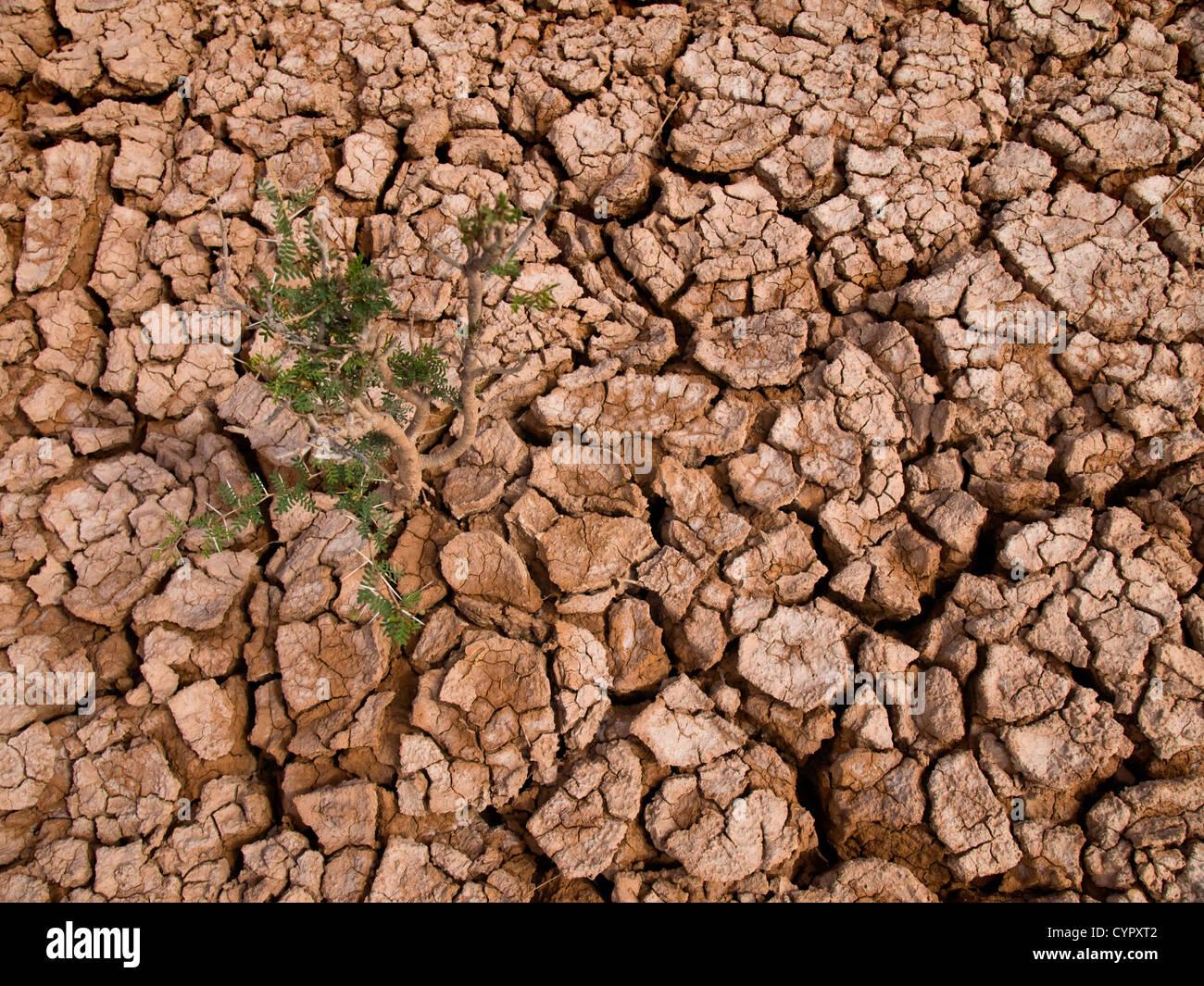 Une épineuse plante poussant dans un sol terre cuite. Photo Stock